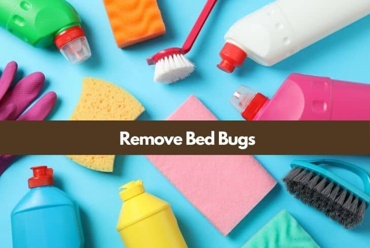remove bed bugs furniture